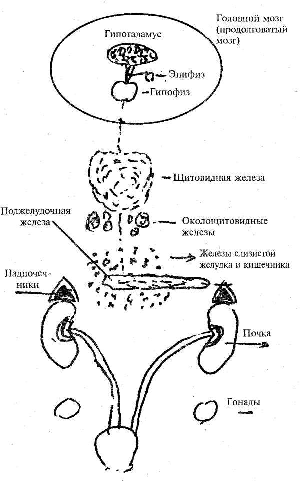 Арахноидит фото
